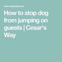 How to stop dog from jumping on guests | Cesar's Way