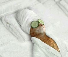 :-))) I need some spa treatment #pets #funny #cat