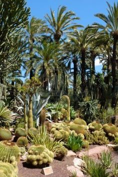 Huerto del Cura jardín en Elche, Costa Blanca, España. The centre of Palm growing. The Spanish Royal Family get their dates from Elche