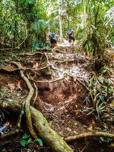 Wanderweg im Taman Negara.  #TamanNegara #Malaysia #Reiseroute #Westküste #Asien #SüdOstAsien #SouthEastAsia #Asia #Backpacking #Travel #Reisen #Weltreise #jungle #Dschungel #Wald #Forest