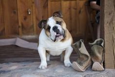 Bring Your Dog to a Spa for Serious Pet Pampering. Sorrel River Ranch in Moab, Utah. #PetFriendly http://blog.organicspamagazine.com/bring-your-dog-to-a-spa-for-some-serious-pet-pampering/#