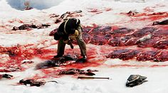 Canadian Sealers Association: Stop the sealers killing seals for fur, fun, money and products. http://www.change.org/petitions/canadian-sealers-association-stop-the-sealers-killing-seals-for-fur-fun-money-and-products?utm_campaign=autopublish_medium=facebook_source=share_petition# @SeaShepherd #defendconserveprotect