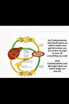 Carbohydrates with insulin/glucagon There are many components of weight loss including exercise, detoxification, endocrine re-balancing, nutrient density, etc. A very important aspect is how we handle carbohydrates. If your body is not sensitive to them then your intake of carbohydrates will match your output of energy expended and you will not gain weight. However, if your body has become sensitive to carbohydrates then you will begin to overproduce insulin (hyperinsulinemia). This hormone…