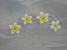 beautiful Plumerias on the beach ... ready for summer!