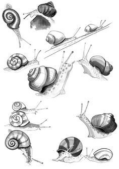 Snail sketches by Lisa Buckridge Animal Drawings, Pencil Drawings, Art Drawings, Snail Tattoo, Snail Art, Snail Shell, Desenho Tattoo, Drawing Techniques, Animal Tattoos