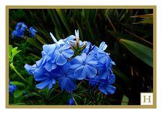 Flores-124 by MARCELO Harán, via Flickr