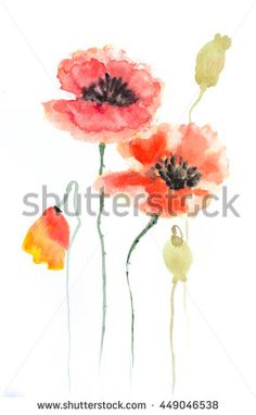 Stylized Poppy flowers on white, Acrylic color painting - stock photo