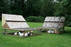 LillyZoo Farm