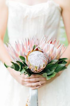 Your wedding bouquet is the definitive accessory for your wedding dress. No matter what time of year you are getting married, there's an appropriate bouquet arrangement and design that will flatter your dress o. Protea Wedding, Spring Wedding Bouquets, Floral Wedding, Wedding Flowers, Bridal Bouquets, Bride Flowers, Protea Bouquet, Floral Bouquets, Wedding Bouquets