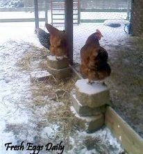 WINTERIZING THE COOP. Fresh Eggs Daily: Cold Weather Prep - Winterizing your Flock