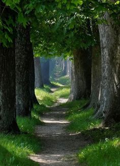 Dirt path with tree roots... my favorite.