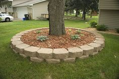 Similiar Landscaping Stones Around Pine Trees Keywords