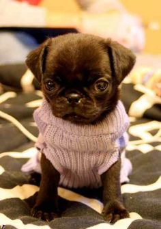 Dogs in sweaters!