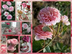 Old English Rose....by Silvia Hokke