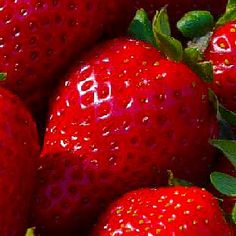 STRAWBERRY SEEDS (Fragaria ananassa) bright red fruit has great flavor (Organic 50 seeds) 2013 collection Strawberry Seed, Strawberry Plants, Grow Strawberries, Strawberry Sauce, Strawberry Fields, 2 Ingredient Recipes, Hair Pack, Red Fruit, Gardens