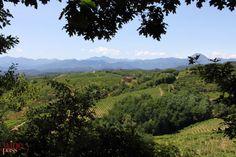 A panorama of the countryside around Gattinara, Alto Piemonte http://www.winepassitaly.it/index.php/en/travel-wineries-piedmont/maps-and-wine-zones/alto-piemonte/focus/gattinara#!prettyPhoto[gallery84c22c895e]/8/