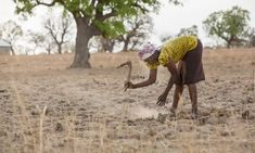 Third of global food production at risk from climate crisis | Climate change | The Guardian