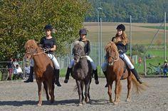 Litla Hestshus - Reitstall AR 1h von Oltingen entfernt