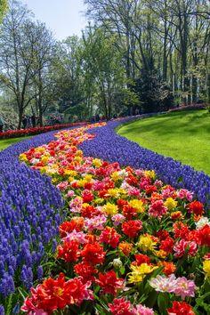 Organic Gardening For Beginners Info: 7387613460 Beautiful Flowers Garden, Exotic Flowers, Beautiful Roses, Beautiful Nature Wallpaper, Beautiful Landscapes, Most Beautiful Gardens, Beautiful Places, Gardens Of The World, Parcs