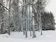 Koivikon Katveessa: Talvinen maaliskuu