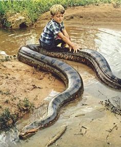 Green anaconda and a young boy, my son would totally do this. Snakes are not evil treat them with respect and they make awesome pets.