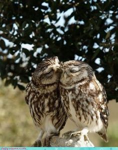 owls in love. It's my grandma and grandpa!!!