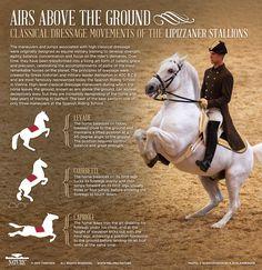 Lipizzaner Stallions, PBS Nature's Legendary White Stallions / Airs Above The Ground - Classical Dressage Movements of the Lipizzaner Stallions