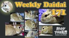Weekly Daidai 171