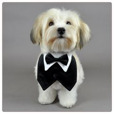Ok, after seeing this, I have decided I need a puppy as the ring bearer and they have to have a little tux collar! More