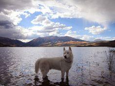Artista passa dois anos viajando pelos Estados Unidos com cão que resgatou e tira fotos espetaculares