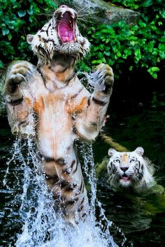 254f4609c75f Amazing wild cats. (WR) Animal Captions