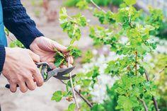 Herbs, Gardening, Magazine, Lawn And Garden, Herb, Magazines, Horticulture, Warehouse, Newspaper