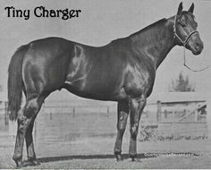 Tiny Charger, br, h, 60, 25-9-8-4 $74,482 SI-100 Depth Charge (TB) X Clabber Tiny Clabber ll, Breeder/Owner: Frank Vessels, Los Alamitos, Ca.