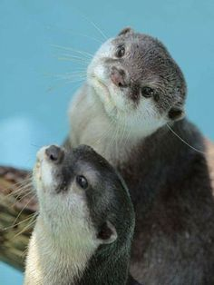 15 best it was the otter one images cutest animals humorous rh pinterest com