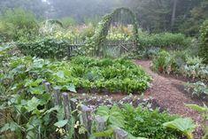 Afbeeldingsresultaat voor fennel plant in vegetablegarden