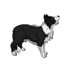 Border Collie by StormFalconFire