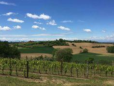 Piemonte Monferrato zona dei vini Grignolino
