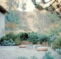 in the areas where people hangout >> succulents and pea gravel