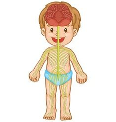 Little boy with nervous system vector image on VectorStock Physical Education Games, Early Education, Science Education, Human Body Science, Human Body Unit, Human Body Anatomy, Deaf Culture, Disability Awareness, Nervous System