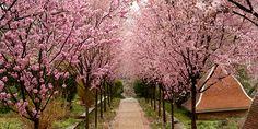 Gardens — Dumbarton Oaks http://www.doaks.org/gardens