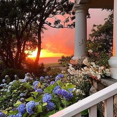 Sunset in Cape Cod...Tag your bestie!....📷 credit: @oldsilvershed . . . . #fixerupper#newhome#designideas#instaluxe#designporn#interiorinspiration#homeinspo#instadesign#luxuryhome#designlovers#interiorstyle#homeideas#casa#hogar#designinspo#homedecor#realestate#fashionaddict#homeinspo#design#thewelldressedhouse#capecod#curbappeal#dreamhome#beachhouse#patio#porch#backyard#landscapelovers