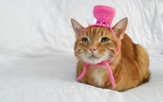 Top Hat for Cat, Cat Hat, Cat Crochet Hat, Novelty Hat for Pets, Wedding Hat, Cat Marriage. Halloween Costume - pinned by pin4etsy.com