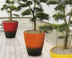 Balkon to także dobre miejsce do uprawy drzewek bonsai uformowanych z gatunków odpornych na mróz: sosen, jałowców, cisów. Bonsai, Planter Pots, String Garden