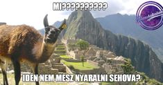 Panda, Camel, Animals, Instagram, Animales, Animaux, Camels, Animal, Animais