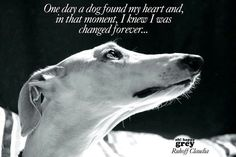 One day a dog found my heart and, in that moment, I knew I was changed forever . . .