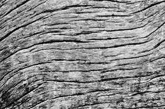 Waves - Waving texture on a driftwood found on Barahona´s Los Patos Beach, en route to Bahía de las Aguilas.