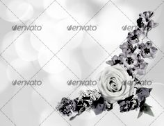 Beautiful flowers bokeh background with place for text 3