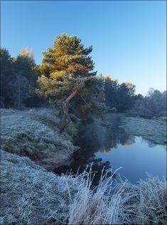 Approach of winter | tree, hoarfrost, autumn, river