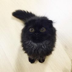 Meet Gimo the cat! A Meet Gimo the cat! As someone noted in those kitten eyes you can see a Cute Kittens, Cats And Kittens, Pretty Cats, Beautiful Cats, Animals Beautiful, Animals And Pets, Funny Animals, Cute Animals, Crazy Cat Lady