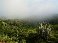 Guerrero paisaje camino a Cochoapa/ landscape on our way to Cochoapa  #fabricasocial, #fairtrade, #mexicantextile